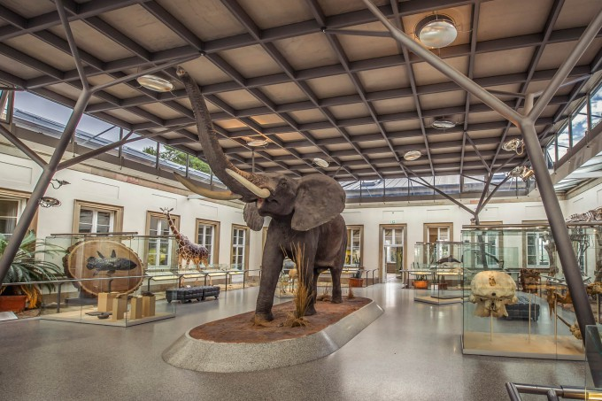 Berlin Naturkundemuseum Preise